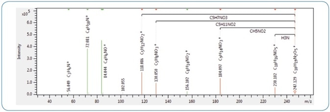 An example MS/MS spectrum of gamma-glutamyl valine in SmartFormula 3D, highlighting characteristic fragments corresponding to the losses of NH3 and CH5NO2. These are indicators for gamma-glutamyl dipeptides rather than alpha-glutamyl dipeptides.