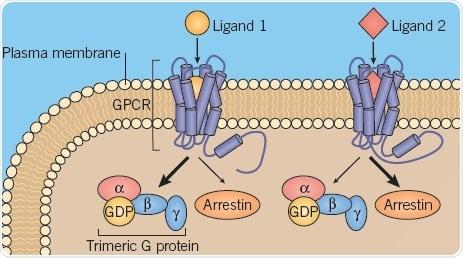 A: Different GPCR conformations