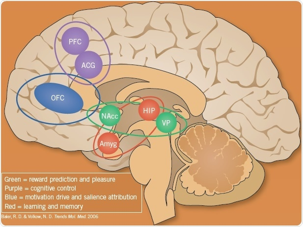 The brain circuits involved in addition