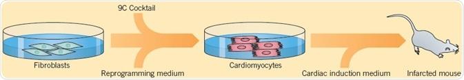 Cao et al. (2016) displayed a technique used for converting human fibroblasts into cardiomyocytes