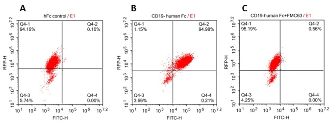 293 cells were transfected with FCM63-scFv and RFP tag . 2x105 of the cells were first incubated with A. Human Fc tag control. B. Recombinant human CD19, Fc Tag (Cat. No. CD9-H5259, 10 μg/ml). C. Recombinant human CD19, Fc Tag(Cat. No. CD9-H5259, 10 μg/ml) and FMC63(Mouse anti-CD19 antibody), followed by FITC anti-human IgG Fc antibody, and then analyzed using NovoCyteTM Flow Cytometer. RFP was used to evaluate CAR(FMC63-scFv) expression and FITC was used to evaluate the binding activity of recombinant human CD19, Fc Tag.