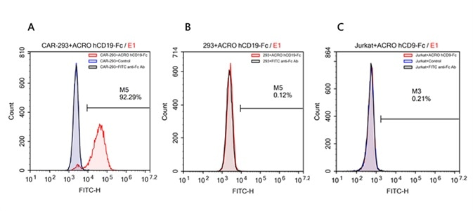FACS analysis of human CD19 protein, Fc Tag (ACROBiosystems, Cat. No. CD9-H5259) binding to A. R1013-C6 cells, B. Expi 293 cells, C. Jurkat E6.1 cells. Cells were first stained with human CD19 protein, Fc Tag (ACROBiosystems, Cat. No. CD9-H5259) followed by FITC anti-human IgG Fc antibody, and then analyzed using NovoCyteTM Flow Cytometer. The data were analyzed with FCS Express 6Plus and GraphPad Prism 5 software.