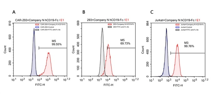 FACS analysis of human CD19 protein, Fc Tag (Company N) binding to A. R1013-C6 cells, B. Expi 293 cells, C. Jurkat E6.1 cells. Cells were first stained with human CD19 protein, Fc Tag (Company N) followed by FITC anti-human IgG Fc antibody, and then analyzed using NovoCyteTM Flow Cytometer. The data were analyzed with FCS Express 6Plus and GraphPad Prism 5 software.