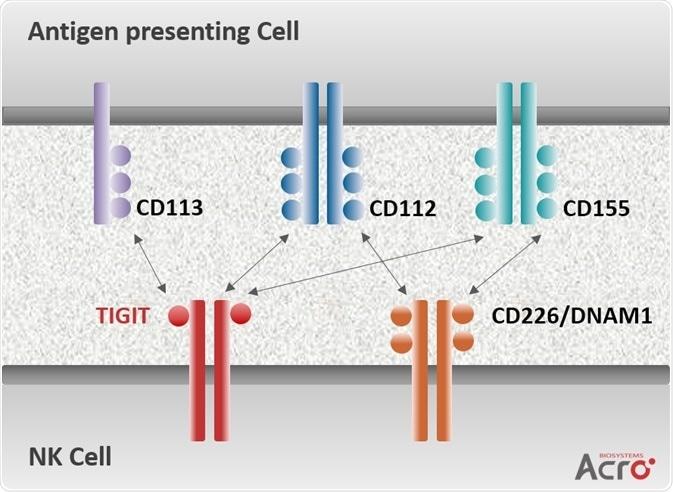 TIGIT Signaling Axis