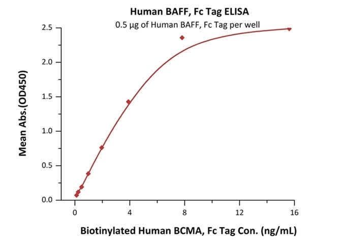 Immobilized Human BAFF, Fc Tag (Cat. No. BAF-H4268) at 5 μg/mL (100 μL/well) can bind Biotinylated Human BCMA, Fc Tag (Cat. No. BC7-H82F0) with a linear range of 0.12–1.95 ng/mL.
