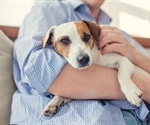 Chemicals at home responsible for decreased fertility in men and dogs
