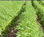 Don't Believe the Hemp: UHPLC Analysis of Hemp Seed Oils