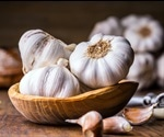 Could garlic oil represent an alternative to antibiotics in the food industry?
