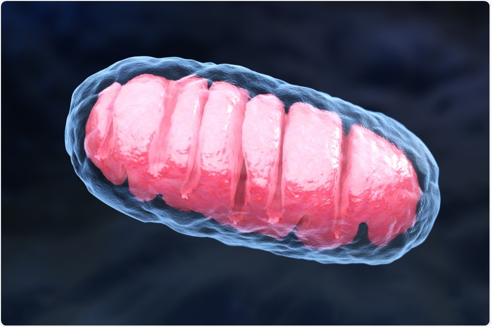 Damaged mitochondria contribute to chronic inflammation