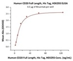 Human CD20 Full-Length Proteins