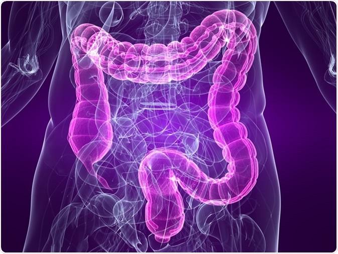 Ejemplo con el colon destacado. Haber de imagen: Sebastian Kaulitzki/Shutterstock