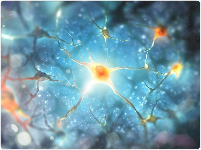 Neurons and nervous system 3d illustration. Image Credit: Andrii Vodolazhskyi / Shutterstock