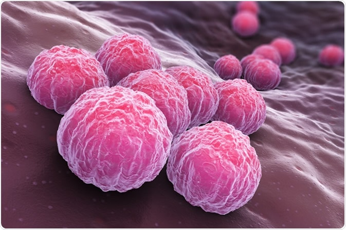 Chlamydia trachomatis, an obligate intracellular human pathogen, is one of four bacterial species in the genus Chlamydia. 3D illustration - Illustration Credit: Tatiana Shepeleva / Shutterstock