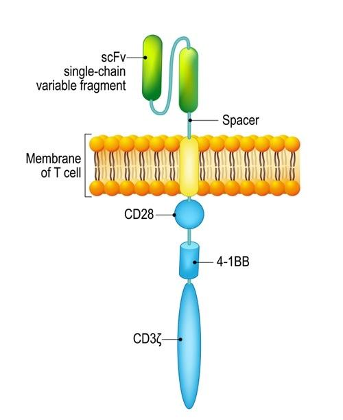 T cell quiméricoe do receptor do antígeno (CARRO). Crédito de imagem: Designua/Shutterstock