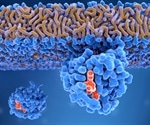 Researchers unlock secret behind the activation of Ras proteins