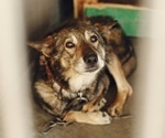 Disease transmissible from dogs to humans shows up in Iowa