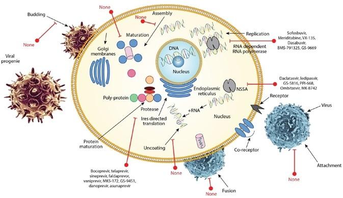 Drug discovery for antiviral agents.
