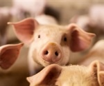 Researchers identify exact origin of 2009 swine H1N1 flu pandemic