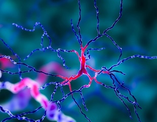 Researchers reveal mechanism underlying most common cause of epileptic seizures