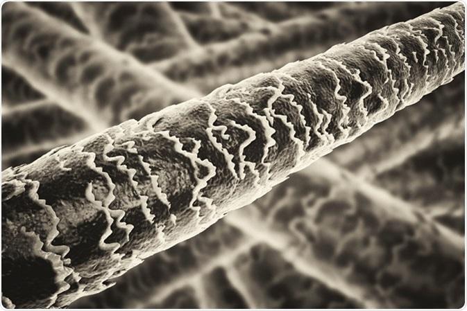 Human hair under microscope illustration. Image Credit: Kateryna Kon / Shutterstock