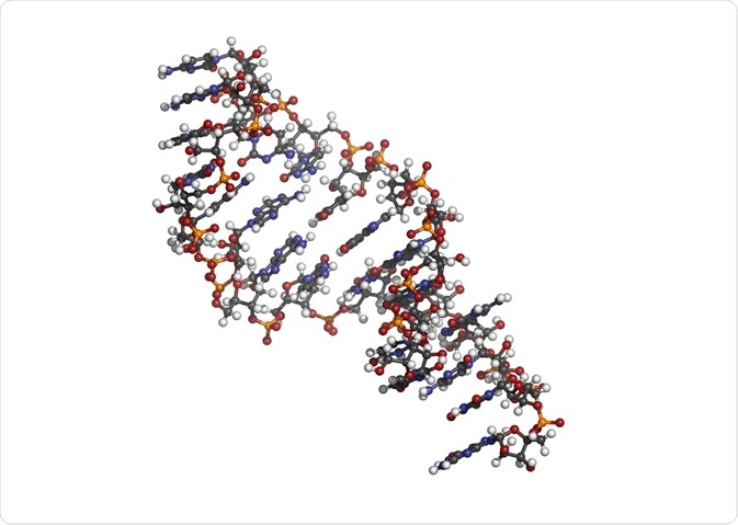 Micro RNA (miRNA, hsa-miR-133a) structure, computer model.