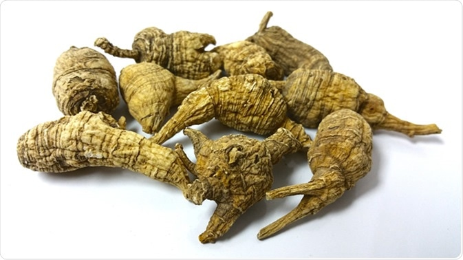 American ginseng (Panax quinquefolius) grows in rich woods through most of the eastern United States, including the mountains and upper Piedmont of North Carolina.
