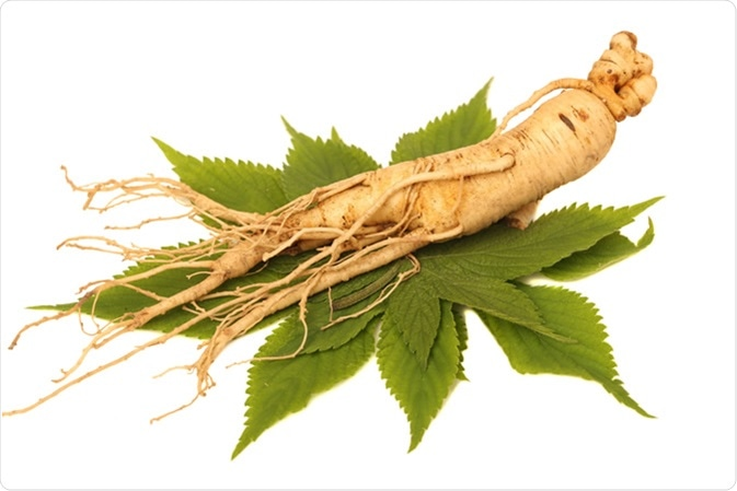 Ginseng: Tapering root with variable number of lateral roots, 2-12 inches long, tan to reddish brown. Image Credit: cdfa.ca.gov