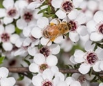 Manuka honey could be useful in treating cystic fibrosis lung infection