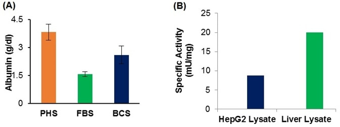 (A) Albumin concentration in pooled human serum (PHS), fetal bovine serum (FBS), and Bovine calf serum using K554. (B). Measurement of Alanine aminotransferase activity in HepG2 cells and liver lysate using K752.