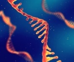 Study identifies specific small RNA molecule that can reduce levels of cancer-promoting gene