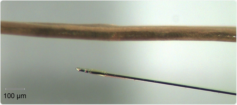 The ultra-small microelectrode biosensor next to a human hair. This image demonstrates the degree of miniaturization that Marinesco