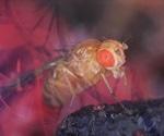 First commercial ChIP kit range released for Drosophila