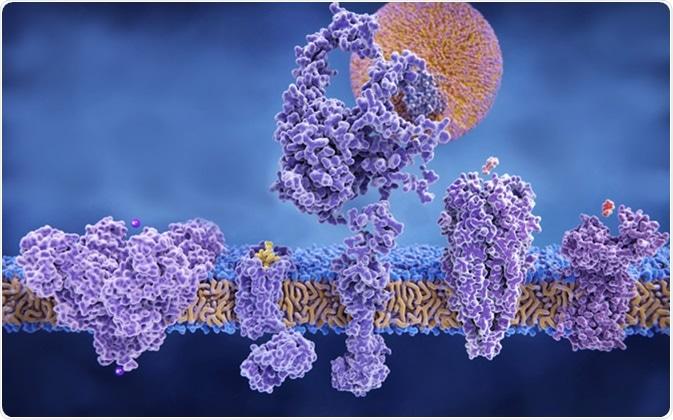 Different structures of membrane proteins: (left to right) Potassium channel, delta-opioid receptor, LDL receptor, acetylcholine receptor, histamine receptor, 3d rendering - Image Credit: Juan Gaertner / Shutterstock
