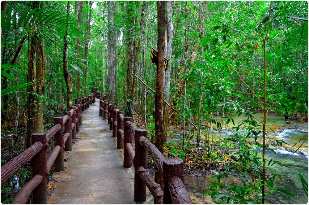 La confiance de région boisée recommande que la forêt se baignant devrait être prescrite sur les NHS.