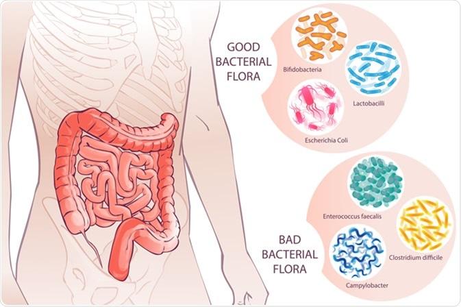 Bacterial Flora. Image Credit: first vector trend / Shutterstock