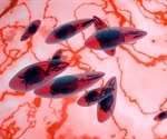 Dangerous brain parasite invades host cell, maintains steady nutrient supply