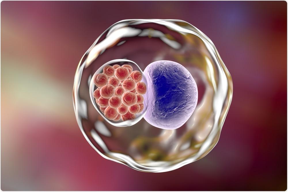 Os trachomatis da clamídia são um micro-organismo insidioso que cause a clamídia nos seres humanos.