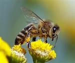 Novel vaccine against bee sting allergy successfully tested