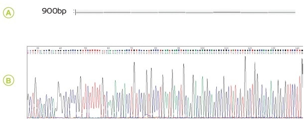 Purity of genomic DNA (A) and cleaned-up PCR products (B) extracted by BeadTender and manually.