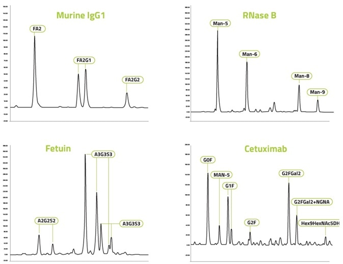 Representative chromatograms for each of the 4 mAbs tested with monitored N-glycans labeled.