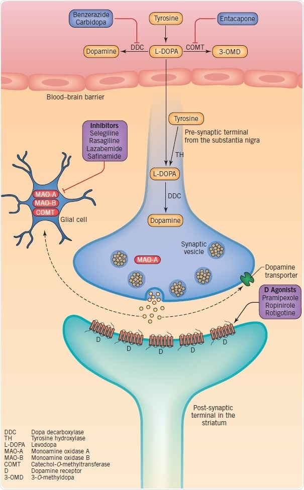 Therapeutic targets at dopaminergic synapses, including dopamine synthesis, metabolism, storage and synaptic transmission