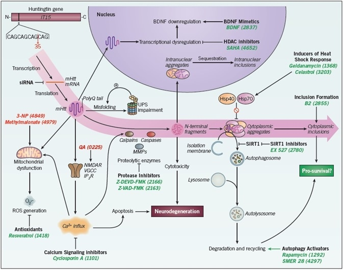 Therapeutic interventions in Huntington's disease.