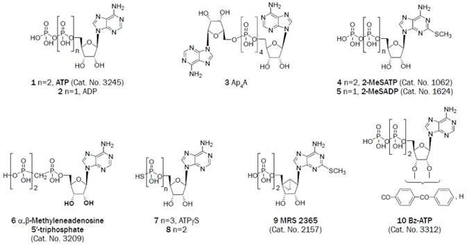 Adenine derivatives that have been useful as antagonists in the study of P2 receptors.