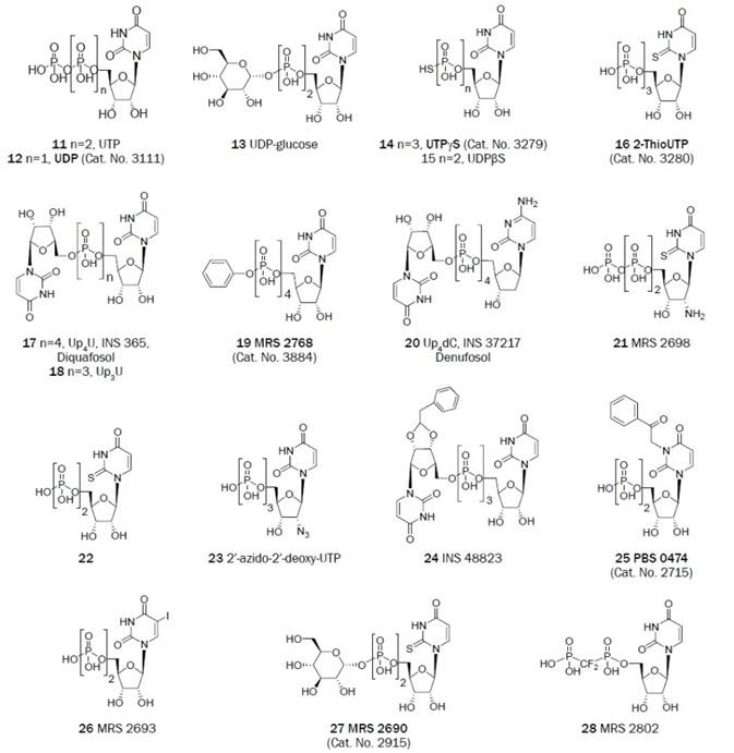 Uracil derivatives that have been useful as antagonists in the study of P2 receptors.