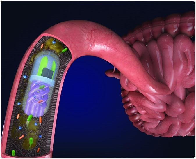 Bacteria in the gut are pulled into the helical channels by an osmotic