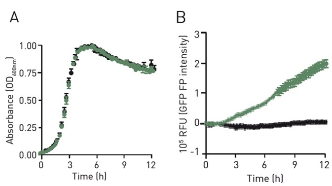 Absorbance (A) and polarized fl uorescence intensity profi le (B) of GFP+ GBS (green) and GFP- GBS (black) grown in CDM media.
