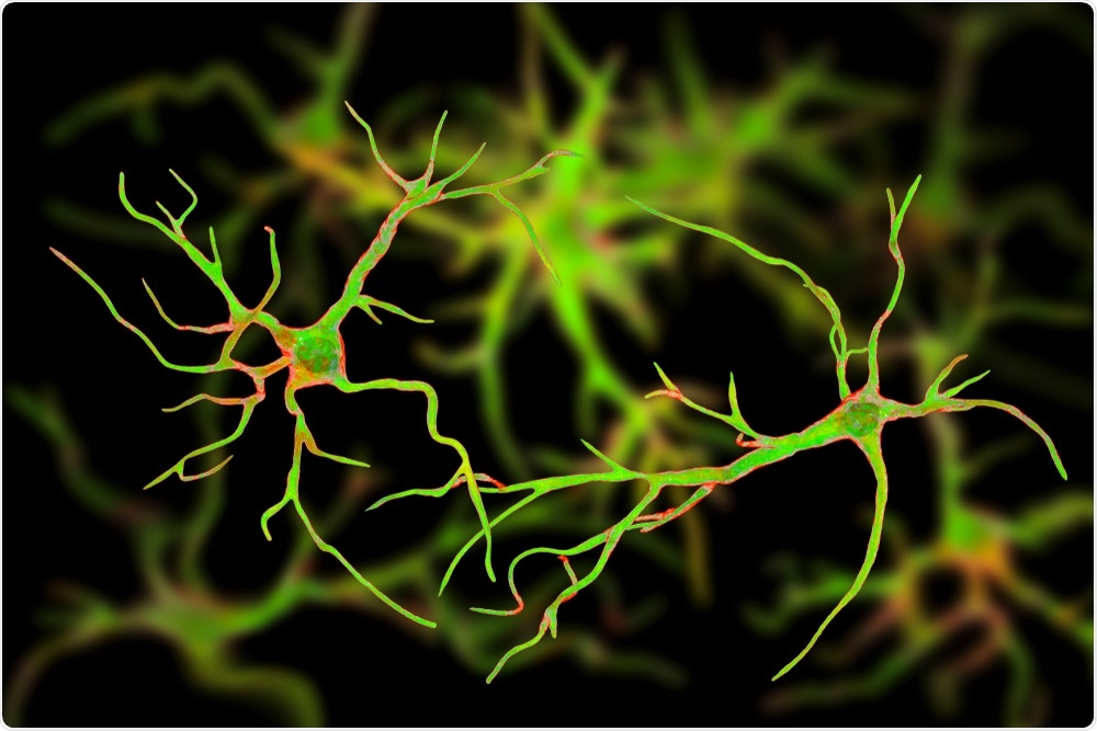 Astrocytes are immune cells in the brain that control neuronal cell death and clean up debris.