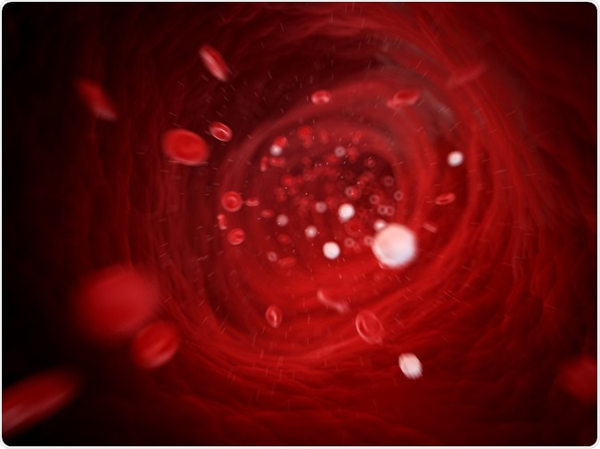 Leukocytes travelling fast in the blood stream