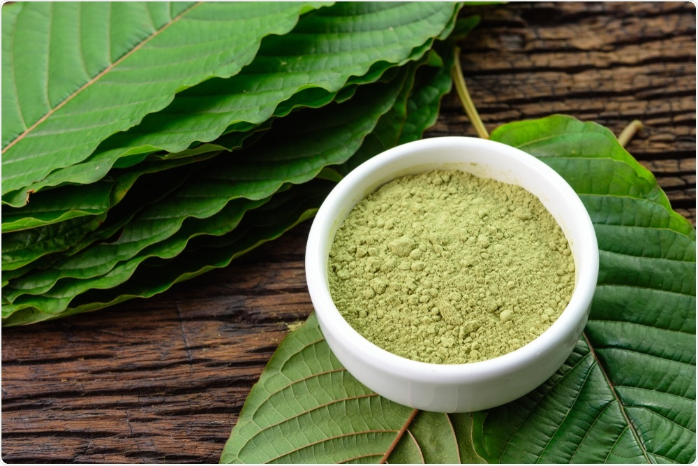 Kratom leaves can be dried and ground up to form a powder, which is often used for medicinal purposes in south asia.