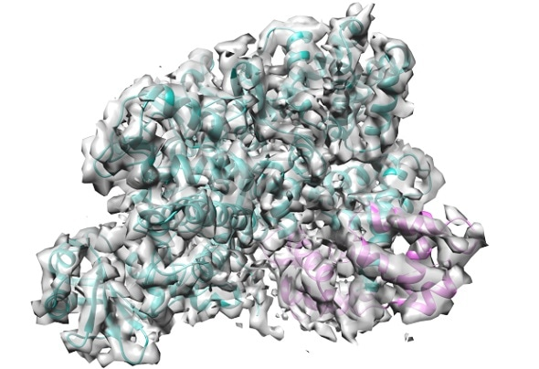 Researchers identify toxin responsible for Legionella growth